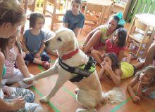 kutyas_kisallatos_tabor_26.jpg