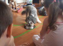 kutyas_kisallatos_tabor_12.jpg