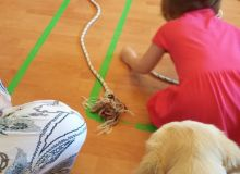kutyas_kisallatos_tabor_25.jpg